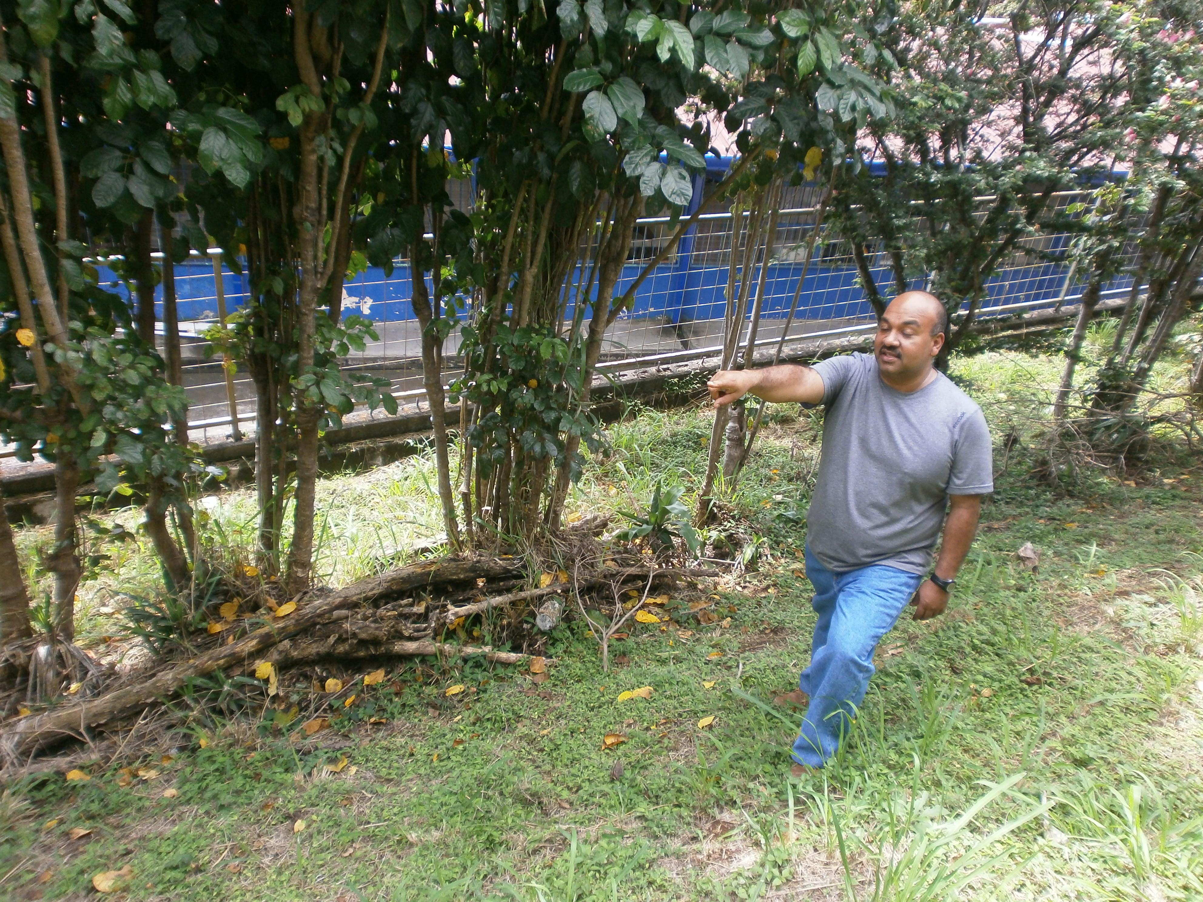 El profe Roberth Villafuerte enseñando la disposición de los árboles en el futuro Bosque Experimental Bonawa.