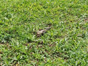 Pájaros muertos han aparecido en las cercanías del cementerio.