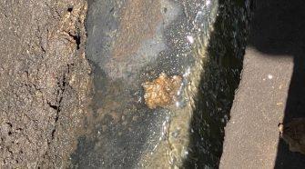 Así lucen las aguas residuales en la urbanización Lomas de Cariari y Doña Rosa.