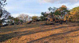 """""""El Santuario"""", nombrado así por la comunidad, se convertiría en el primer Parque Natural Urbano de Belén."""